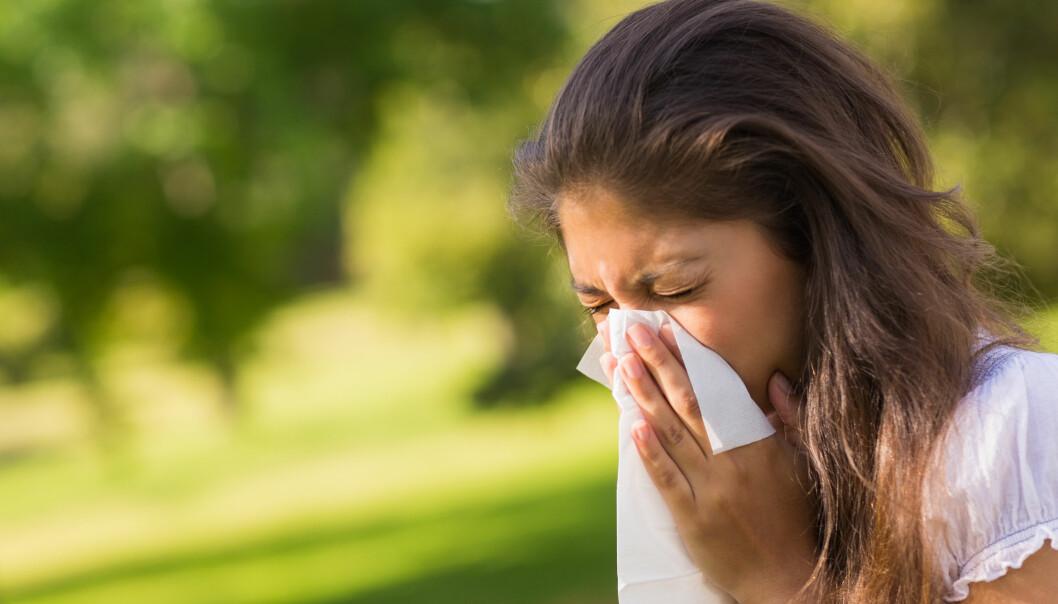 Pollenplager kan gi sykemelding