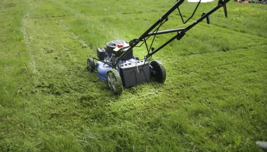 <strong>GRESS:</strong> Klipperne ble testet på gress i ulike høyder. Foto: Øivind Lie-Jacobsen
