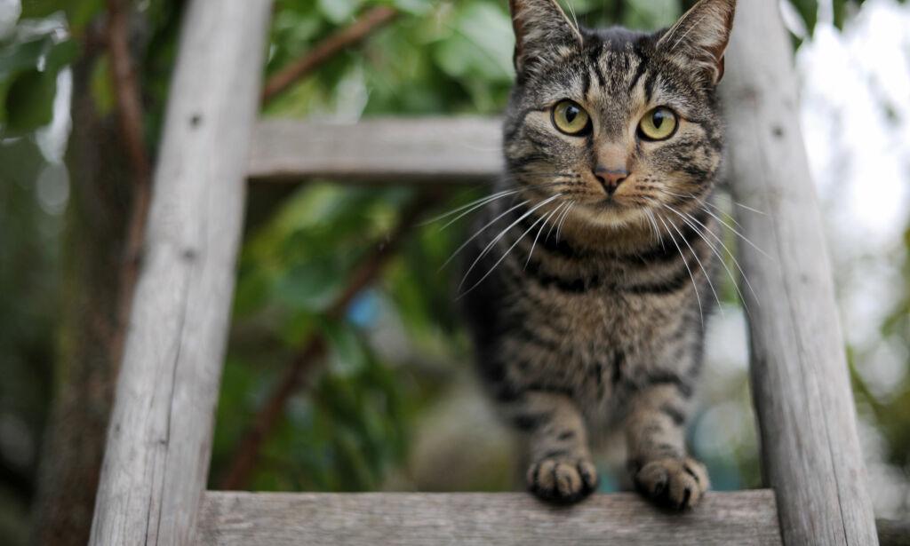 image: Kvinne flyttet fra kattene sine – dømt til betinget fengsel