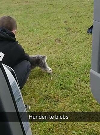 KOSTE SEG: Justin Bieber hadde med seg hunden sin på Norgesbesøket. Foto: Privat