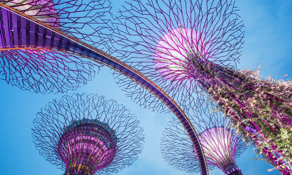 SPEKTAKULÆR GLASSBRU: I Singapore er disse installasjonene i havneområdet blitt en stor attraksjon. Foto: Shutterstock / NTB Scanpix