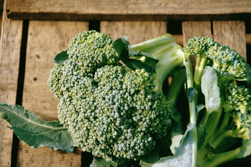 SPIS BROKKOLI: Denne deilige grønnsaken er godt for mye. Spis brokkoli og øk blodsirkulasjonen din! Foto: Scanpix