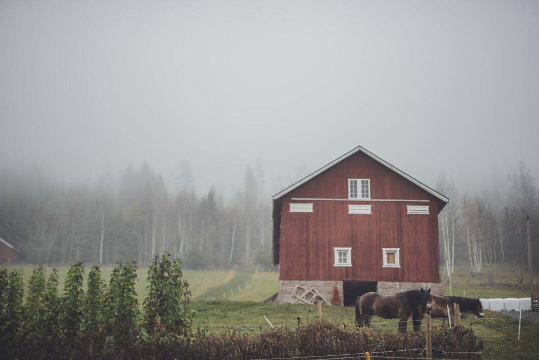 <strong>ENKELT LIV:</strong> Maria har alltid visst at hun skulle bo på gård. Det enkle, men likevel fullkomne livet har alltid appellert til henne. Foto: Maria Vatne/Bygdefotografen