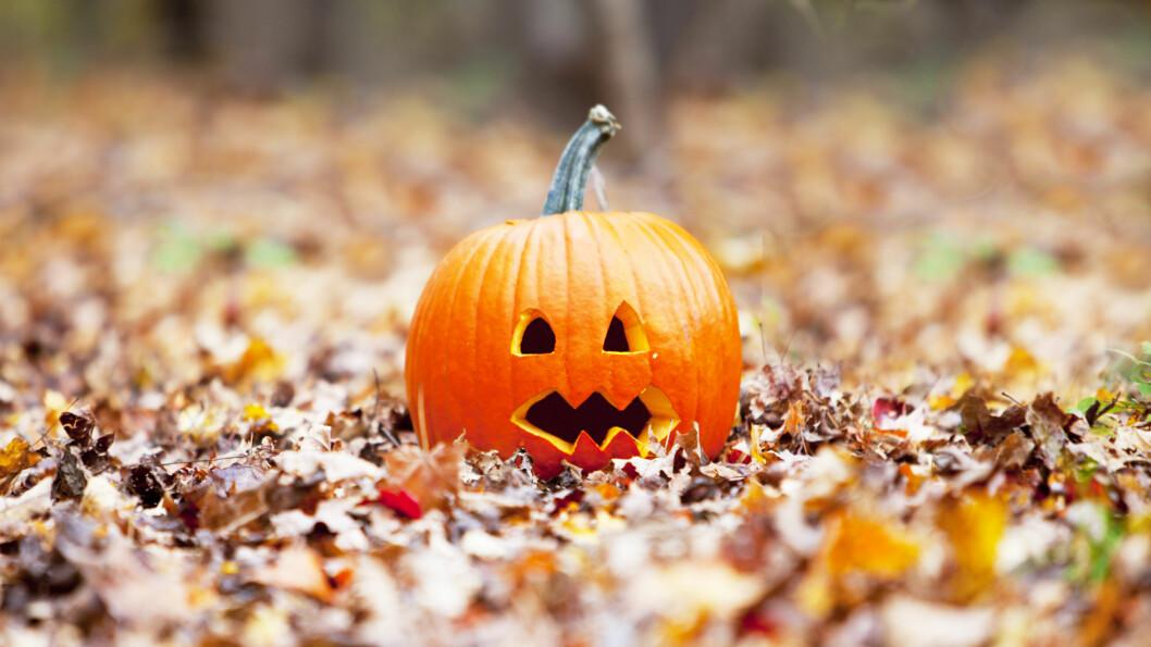 HALLOWEEN: Hvorfor feirer vi egentlig Halloween?  Foto: Shutterstock / Erika Cross