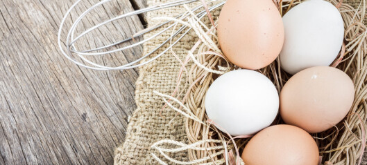 Egg: Hva er forskjellen på de brune og hvite?