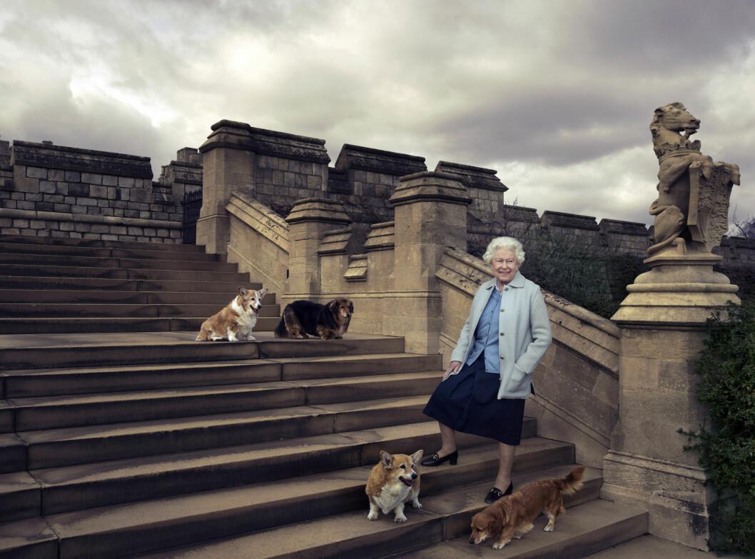 UT PÅ TUR: Dronning Elizabeth elsker å gå lange turer med hundene sine. Dette bildet er sluppet i forbindelse med 90-årsdagen 21. april. Foto: NTB Scanpix