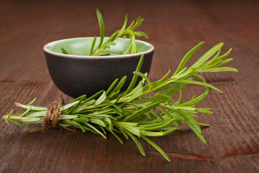 BRUK MER ROSMARIN: Tidligeres studier har også vist at planten kan gjøre deg mer oppmerksom, i tillegg til at den påvirker langtidshukommelsen.  Foto: Getty Images/iStockphoto