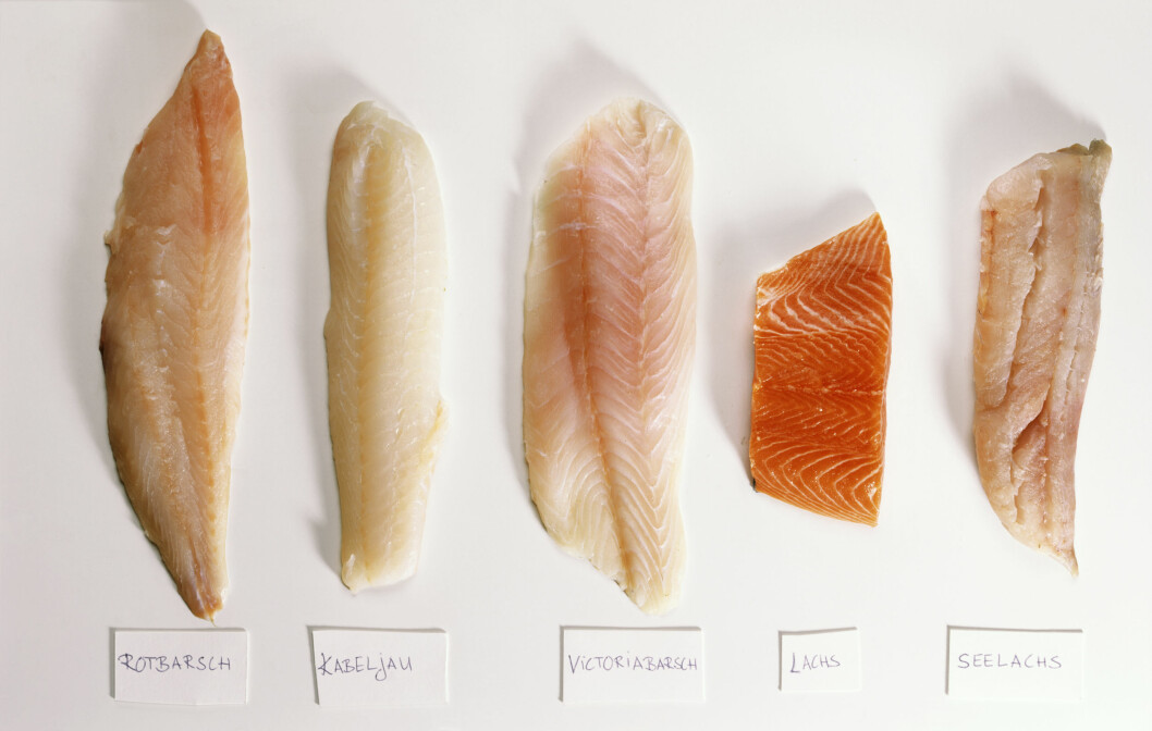 MYE PROTEIN: Svært mange av fiskesortene vi spiser i dag, som laks og torsk, er rike på protein.  Foto: StockFood