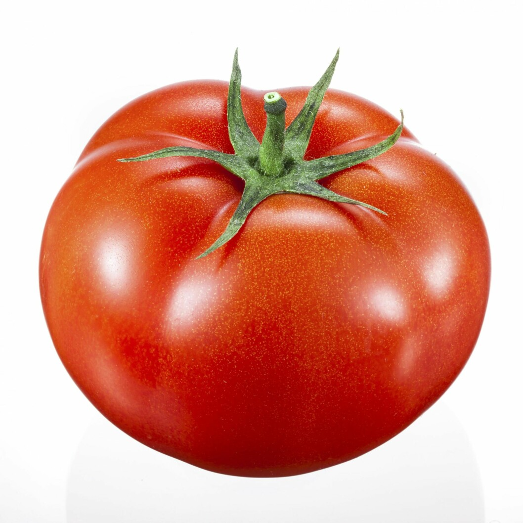 TOMAT: Kalorifattig og rik på A- og C-vitamin. Foto: Shutterstock