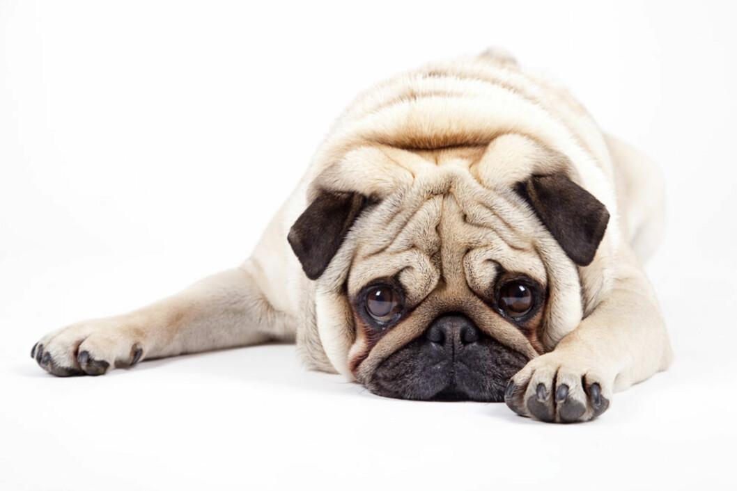 VOFFOR: Også hunder kan bli deppa. Foto: NTB scanpix