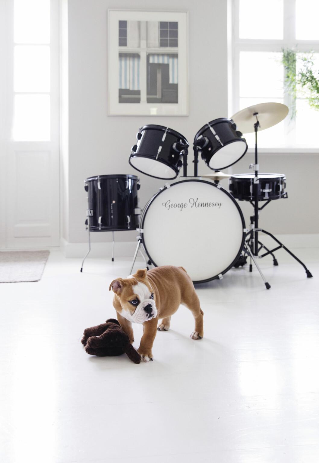 <strong>STÅR FREMME:</strong> Trommesettet tilhører Tines sønn, og får stå midt i stuen så han skal få lyst til å spille. – Jeg synes det er så hyggelig å høre når han spiller, sier hun. Den engelske bulldogen Belle samtykker. Foto: Yvonne Wilhelmsen