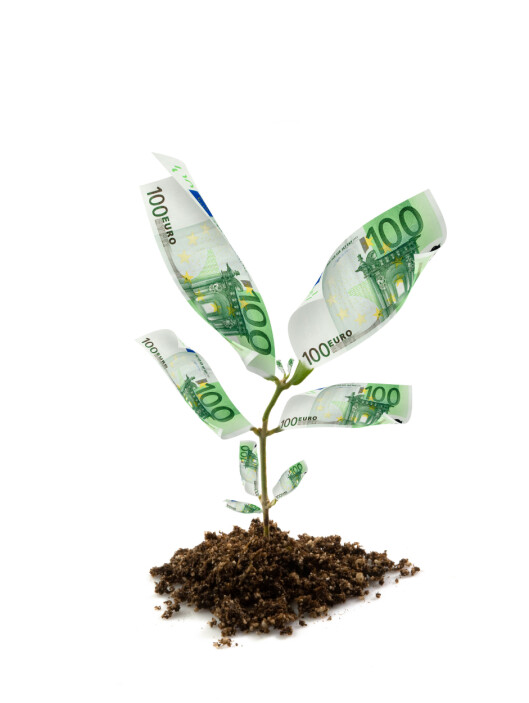 B5DHEM euro bills money plant isolated on white. Image shot 2008. Exact date unknown. Foto: Alamy