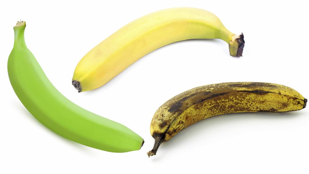STORE FORSKJELLER: Etterhvert som bananen modnes, endres også næringsinnholdet. Mens en grønn banan har omlag 24 prosent stivelse og 6 prosent sukker, har den brune bananen nesten ikke stivelse igjen – bare sukker. Foto: Fotolia
