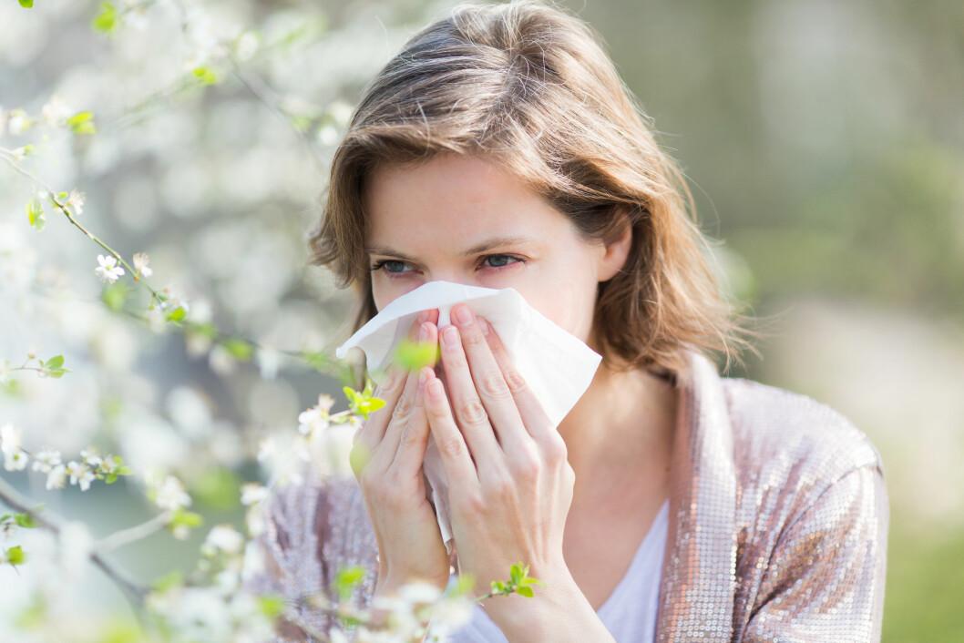POLLEN: Har du pollenallergi gjør du lurt i å starte tidlig på allergimedisinen, da slipper du lettere unna de plagsomme symptomene. Foto: Garo/Phanie/REX/All Over Press
