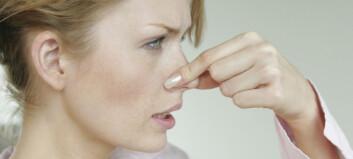 Luktene du bør ta på alvor