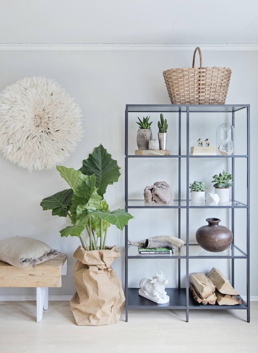 INSPIRASJON: En pose i ubleket papir blir et perfekt sted for de grønne plantene, og lek deg med treverk du finner ute. Foto: Jorunn Tharaldsen