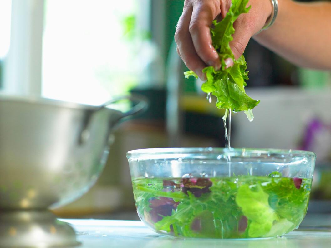 VÅTT: Har du skyllt salaten i vann er det viktig at den er god og tørr før den puttes i plastpose. Er salaten våt kan den nemlig råtne raskere, og vannet fra salaten kan renne ut og bli liggende i bunnen av grønnsaksskuffen. Foto: Cultura Creative (RF) / Alamy/All Over Press