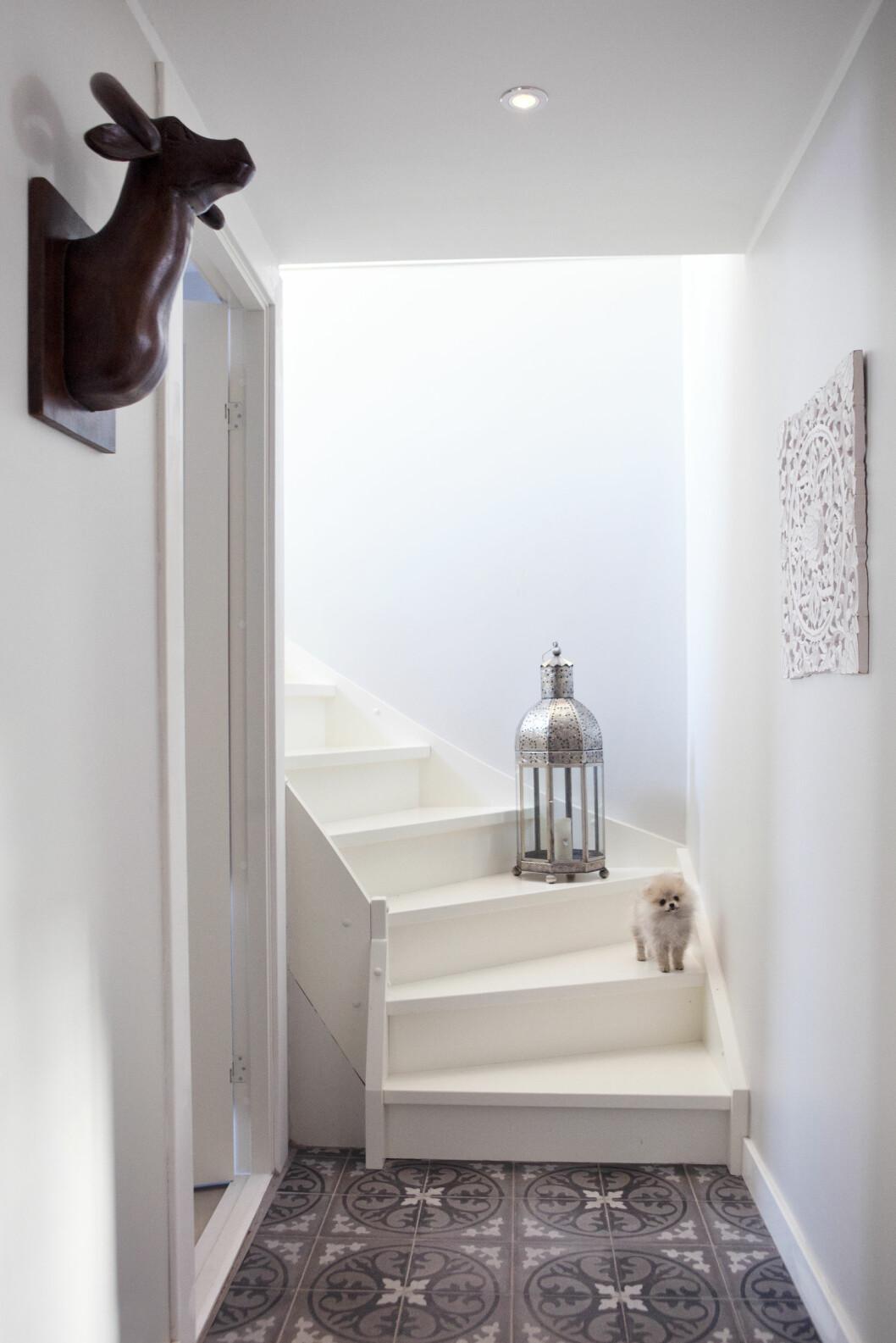 STRIKE A POSE: Pomeranianen Lea poserer i trappen.  Foto: All Over Press Norway