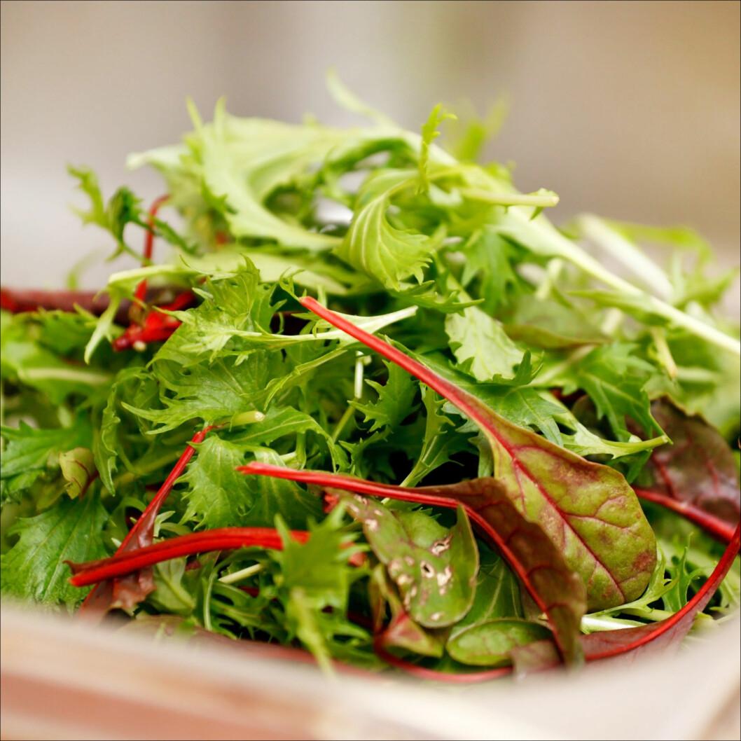 I VANNBAD: Vassen salat kan få nytt liv gjennom et lite vannbad. Prøv det før du kaster! Foto: Maksim Shebeko - Fotolia