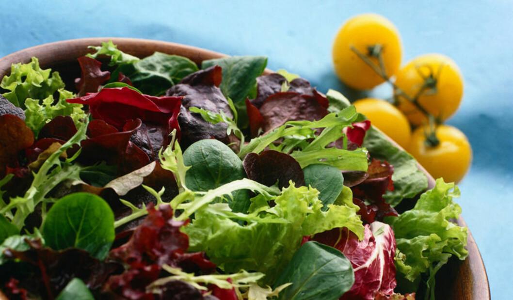 KJØR PÅ: En salat om dagen er bra for magen (og kroppen ellers). Men du trenger også sunt fett og proteiner! Foto: Frukt.no