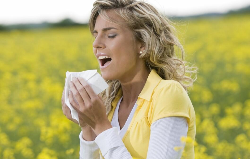 AAATSJOOO: Du nyser, men er det pollenallergi eller en vanlig forkjølelse? Foto: PantherMedia / Stefano Lunardi