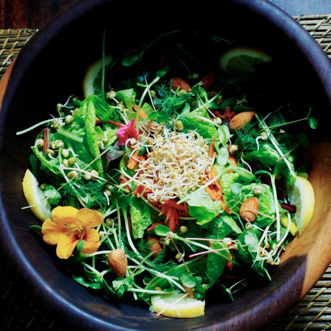HA DET PÅ TALLERKNEN I DAG: Grønn, smakfull mat som holder deg frisk og glad til sinns. Foto: All Over PressAll Over Press