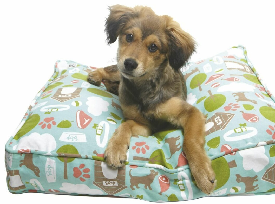 Molly Mutt lager hundesenger i så mange forskjellige kule design at du garantert finner en til din vofs. (fra kr 250, alphadog.no) Foto: Produsenten