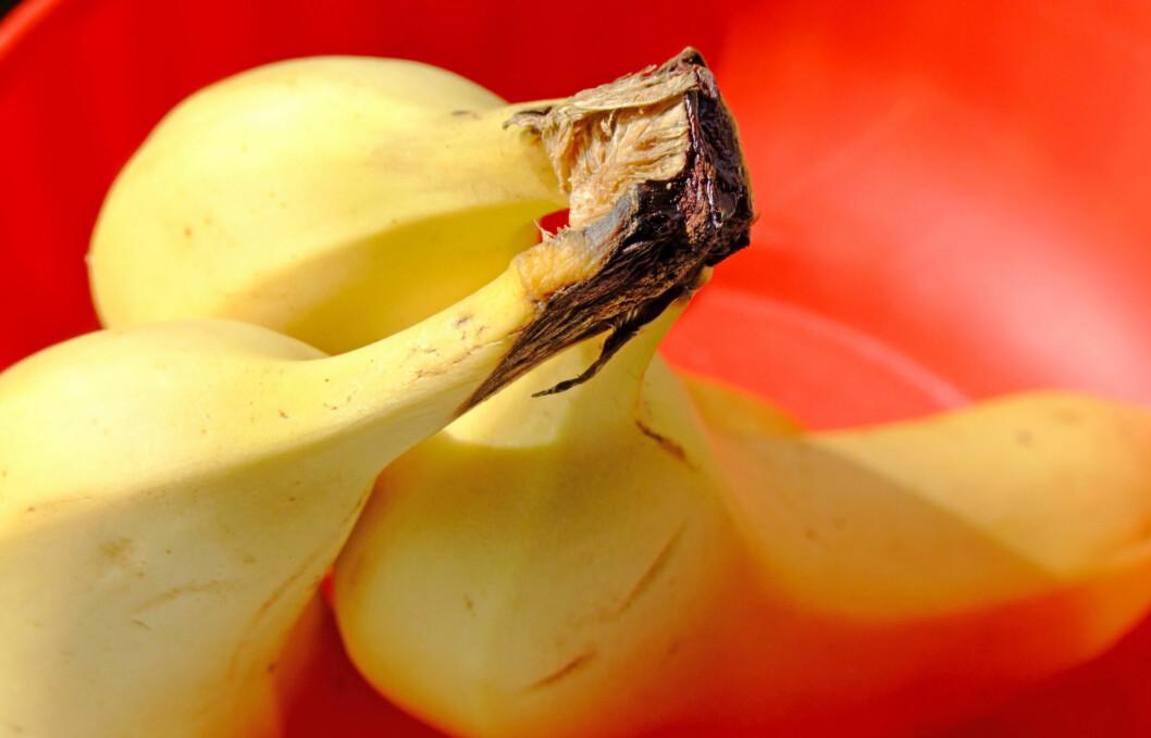 TA EN BANAN: En ny studie viser at bananer vil ha like god effekt på utholdenheten som en sportsdrikk, i tillegg er den uten kunstige tilsetningsstoffer.  Foto: Thinkstock.com