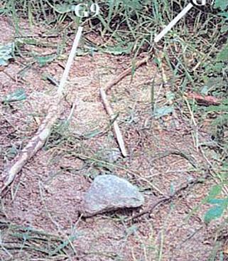 ÅSTEDET: Disse pinnene skal ha blitt brukt til å kvele Kevin. Foto: Svensk politi