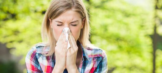 Tar du kortisonsprøyta for å overleve pollensesongen?