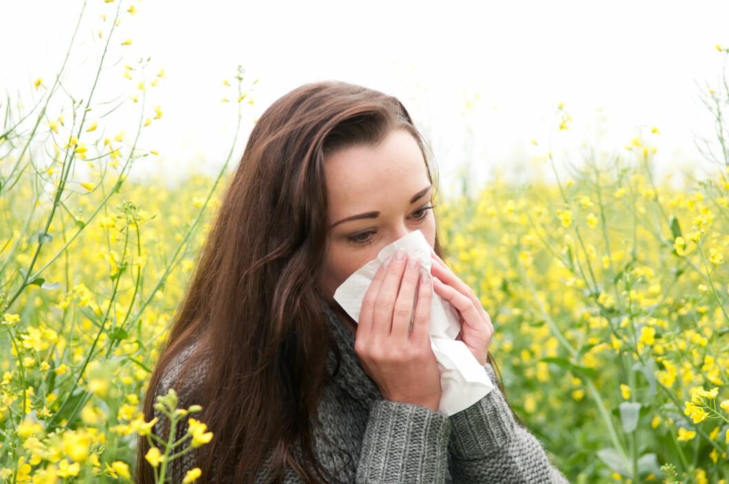 POLLEN: Det regnes at cirka en million nordmenn har pollenallergi, og forekomsten er økende. Foto: Shutterstock / luna4