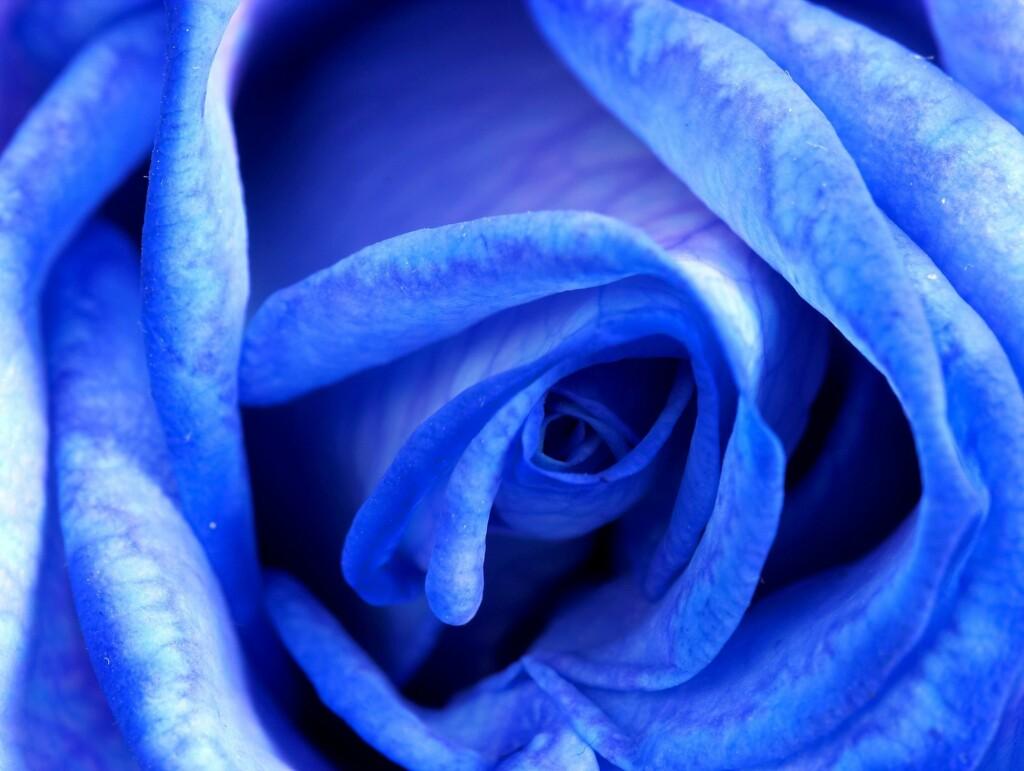047852d7 Filoler er blå - og roser likeså. Foto: All Over Press