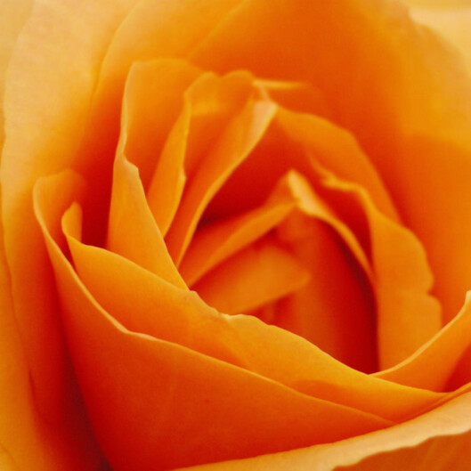 Orange Jeg er din trofaste venn.
