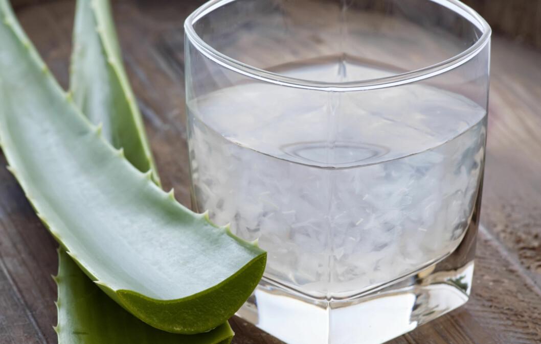 VIKTIG Å SJEKKE INGREDIENSENE: Selv om svært mange produsenter skryter aloe vera-juicen opp i skyene, har det også vrt enkelte studier som har gitt negative bivirkninger. Derfor er det viktig å sjekke ingrediensene.  Foto: Thinkstock.com