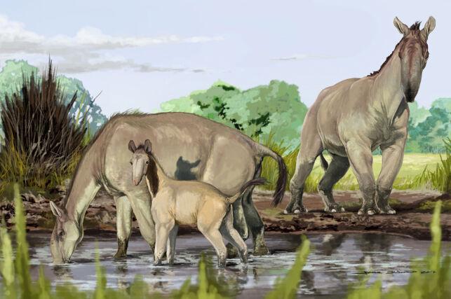 image: Selv ikke Darwin ble klok på denne skapningen. Nå vet vi endelig hva det er