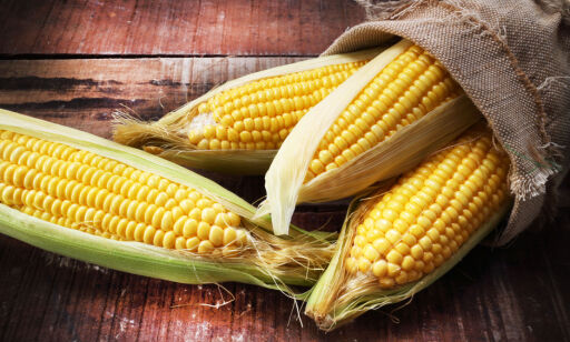 image: Hva er en genetisk modifisert organisme?