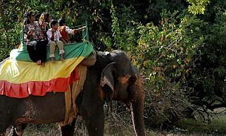 TURISTER: Noen turister rir på en elefant i Sri Lanka. Nå advarer dyrevernorganisasjoner mot dette. Foto: Ishara S. Kodikara / AFP / NTB Scanpix
