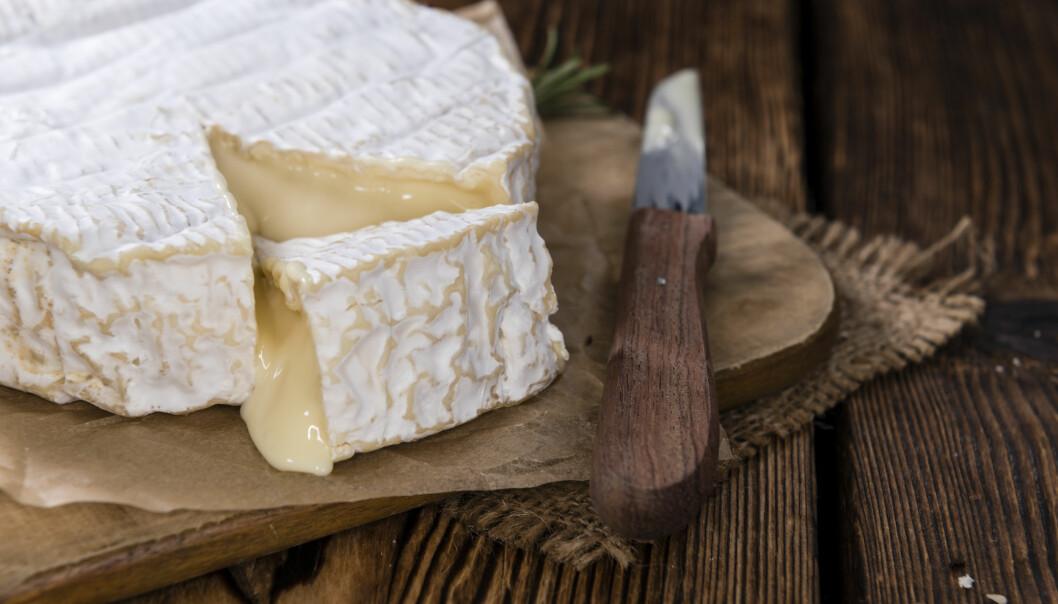 <strong>HVITMUGGOST:</strong> Det er mye som kan kalles Camembert, men bare én prosent er ekte vare, produsert på originalmåten. Illustrasjonsfoto: HandmadePictures / Shutterstock / NTB scanpix