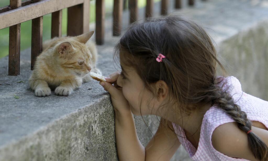 KULE KATTER: En dokumentarfilm om kattelivet i Istanbul har blitt en overraskende suksess på amerikanske kinoer. Her leker en tyrkisk jente med en av hundretusener ville katter i Tyrkia. Foto: AP Photo/Ibrahim Usta