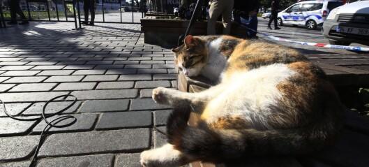 Katter er trolig verdens kuleste dyr. Her er filmen som beviser det