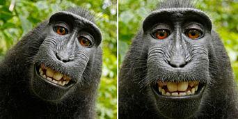 image: Saksøkt fotograf etter «ape-selfie»: - Jeg har fått livet mitt ødelagt