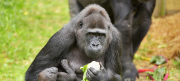 Mann versus Ape