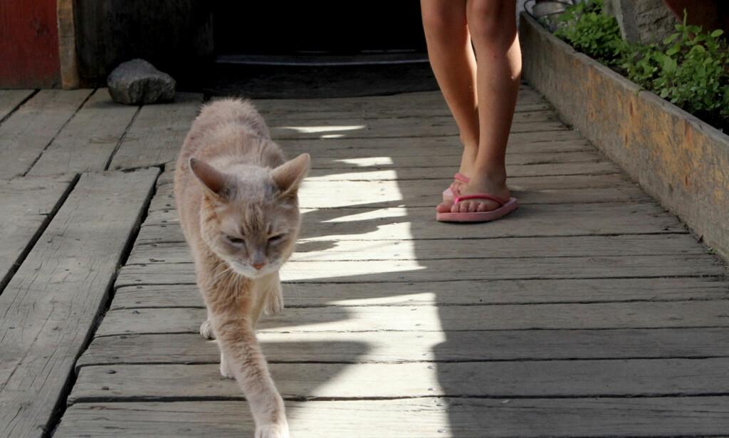 KATT: Borgermester-katten Stubbs er død. Nå kan en av hans kattunger overta borgermester-rollen, ifølge AP. Foto: AP / NTB Scanpix