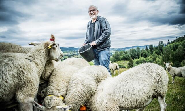 MISTET SAU: Sven Erik Rasmussen mistet sau da ulven tok de tidligere i sommer. Foto: Thomas Rasmus Skaug / Dagbladet