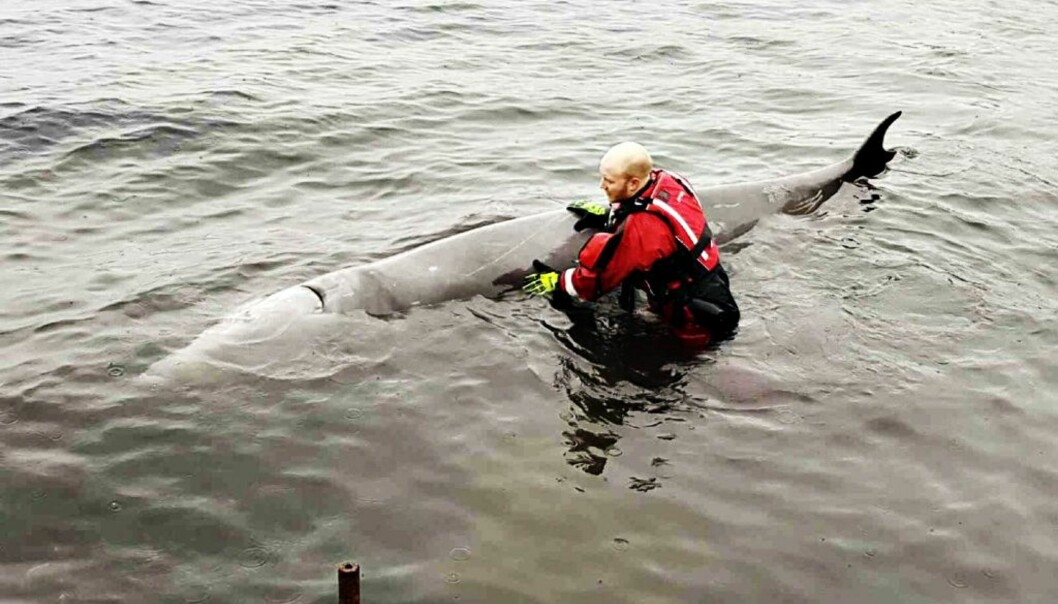 La hvalen få spise plastposer hvis den selv ønsker det!