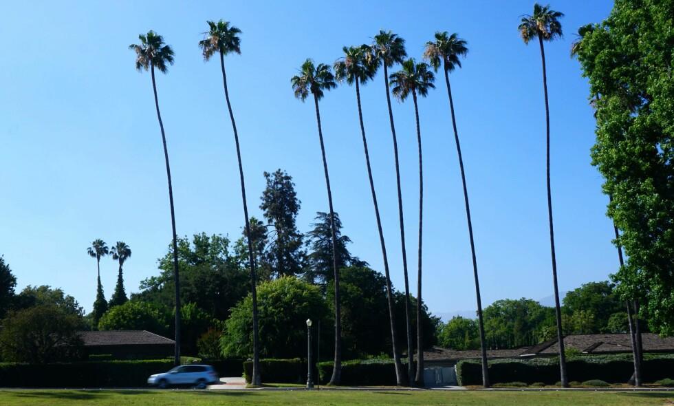 SYMBOL: De fleste forbinder Los Angeles med sol, varme og vakre palmer. Foto: AFP PHOTO / FREDERIC J. BROWN