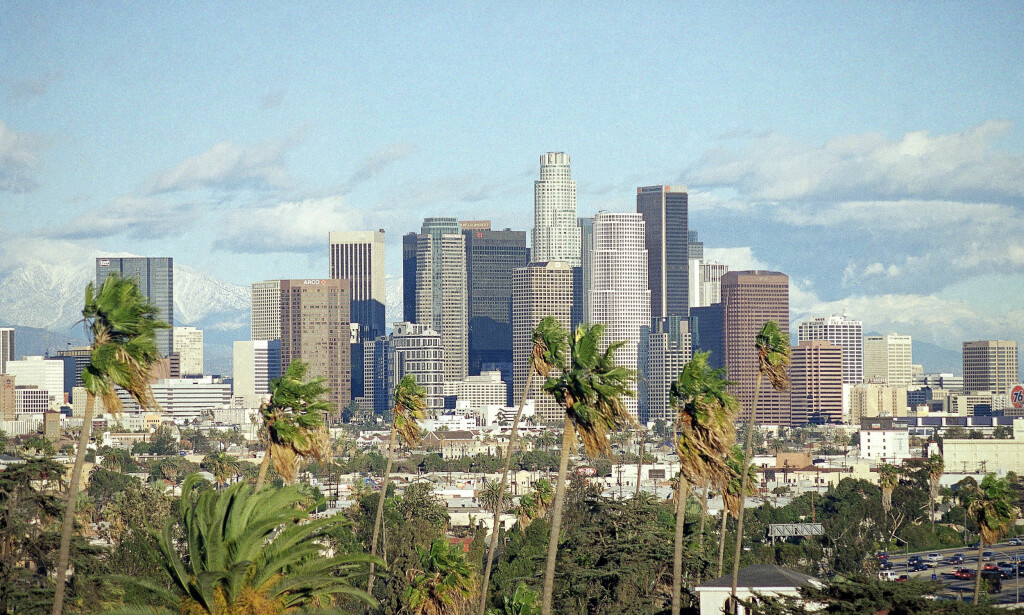 KJENNETEGN: Palmene er noe av det første man legger merke til i storbyen Los Angeles. Det kan endre seg. Foto: AP Photo/John Hayes