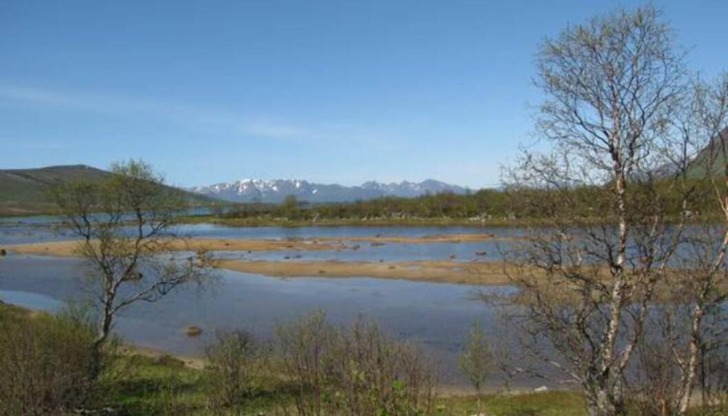 <strong>TROLSK:</strong> Et nydelig skue ved Forfjorden, et par mil nord for Sortland. Legg merke til at bjørka så vidt har begynt å bli lysegrønn 3. juni.