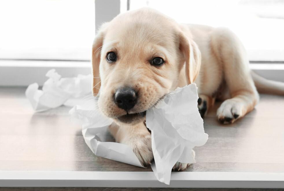 <strong>STORE FORSKJELLER PÅ DYREFORSIKRING:</strong> Norsk Familieøkonomi har sjekket priser og vilkår på forsikring på hund og katt, og avslører store forskjeller både hva gjelder pris og vilkår. Foto: Shutterstock/NTB Scanpix