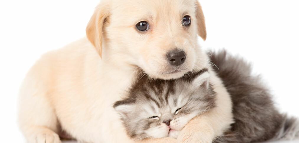 Her får du billigst forsikring på hunden eller katten din